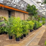 Uncompromising Faith The Fruit Tree Greenhouse