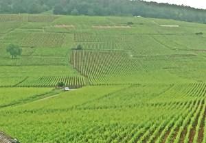 Vosne-Romanee grand cru vineyards June 2016