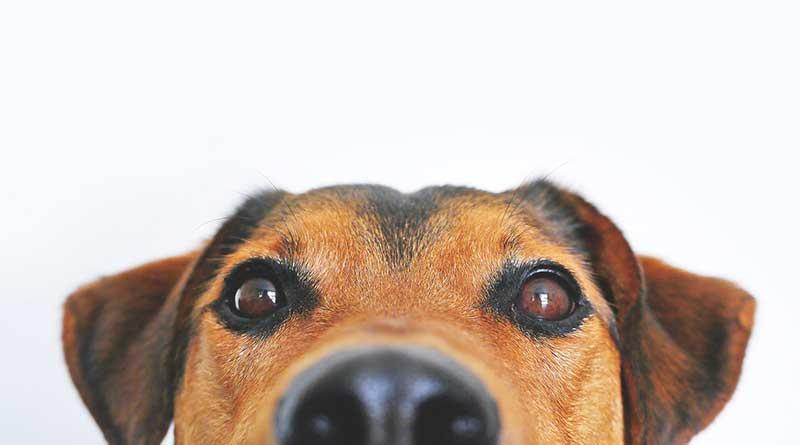 foto di un cane