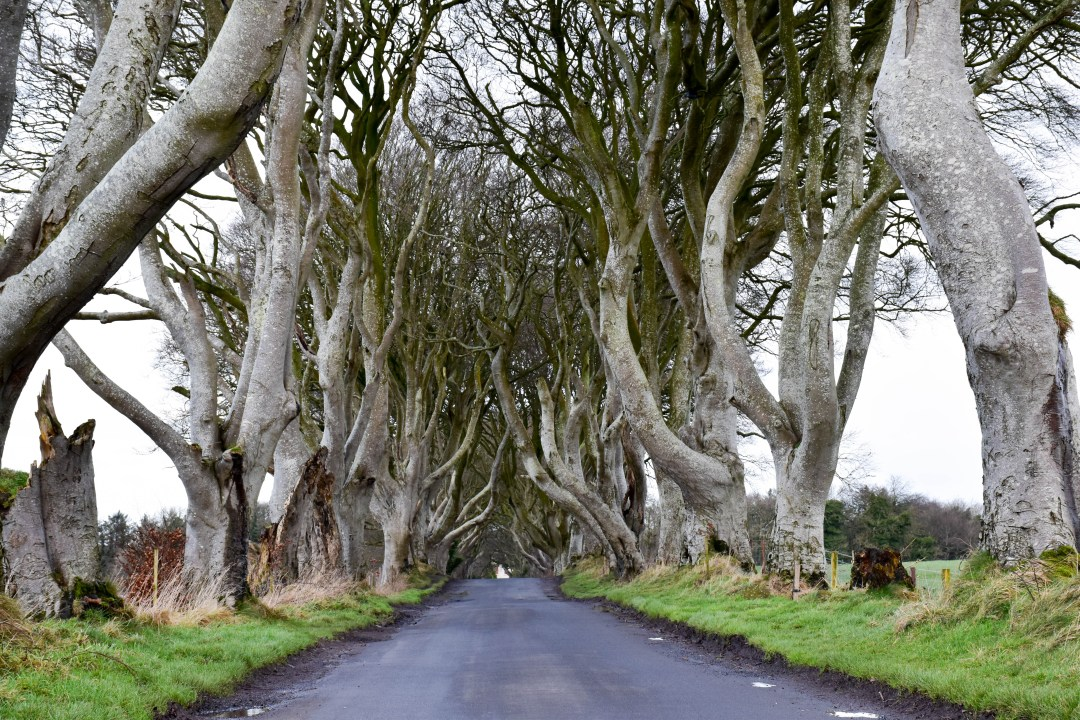 Dark Hedges Irlande du nord - Game of Thrones