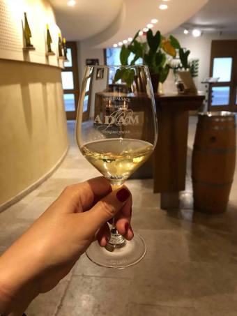 dégustation de vin au domaine adam en alsace