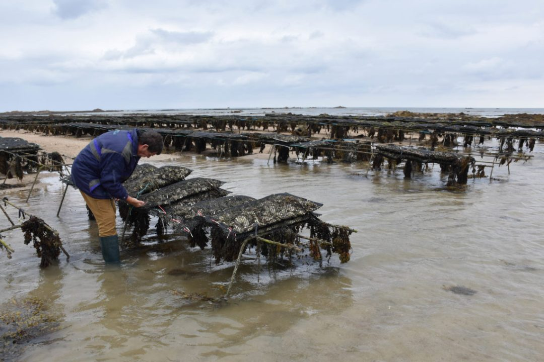 Champagne & Oyster Tour avec Seymour Oyster_Jersey
