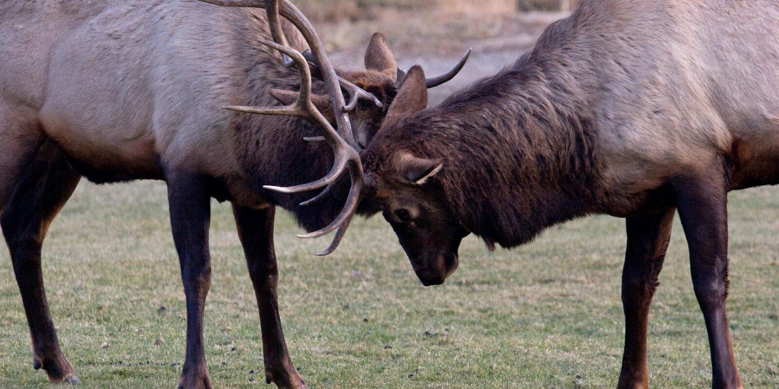 Native Wildlife Species In Colorado