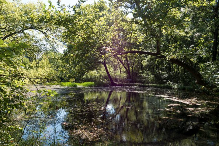 Chickasaw National Recreation Area - photo by Dennis Spielman