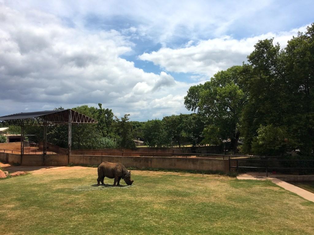 Rhino at the OKC Zoo - photo by Dennis Spielman