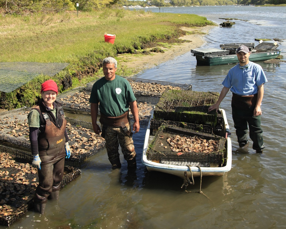 First Light Oysters as First Responders