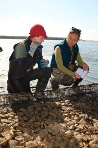 Writer Elise Hugus chats with First Light Oysters farm manager Kris Clark for an Edible Cape Cod story.