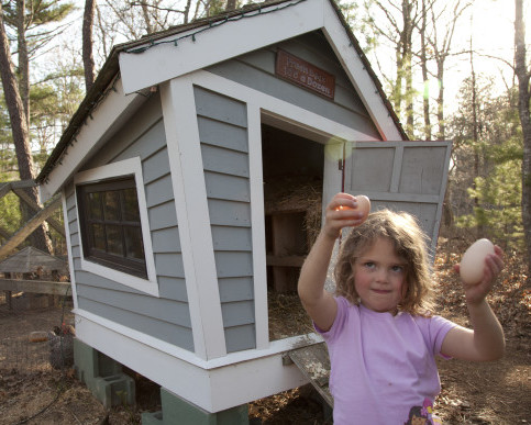 Fun With DIY Chicken Coops