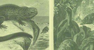 Les îles enchantées, Herman Melville, Le mot et le reste