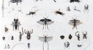 Grillons et sauterelles, Anges radieux, William T. Vollmann, Actes Sud