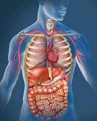 1 18. human body