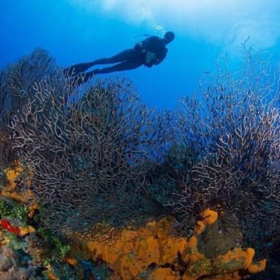 Diving in Bay of Pigs