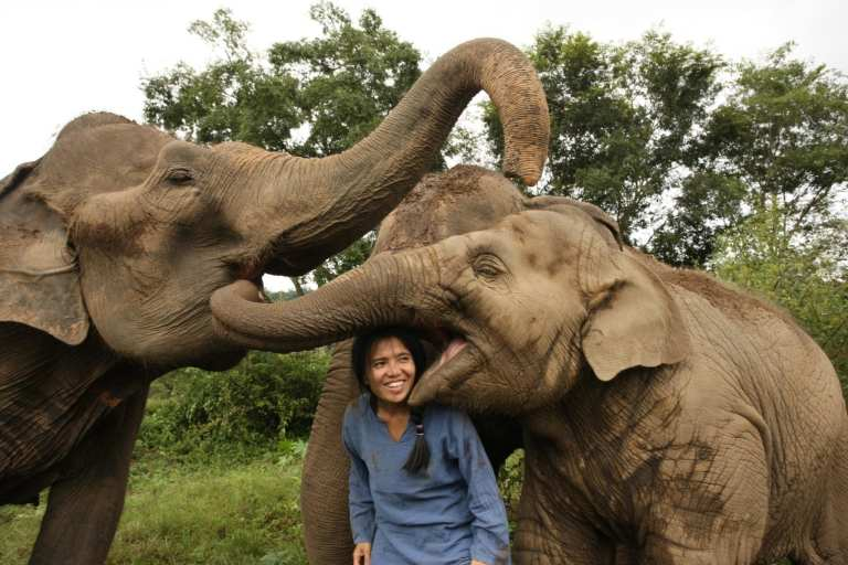 Lek with rescued elephants in Thailand | © Save Elephant Foundation
