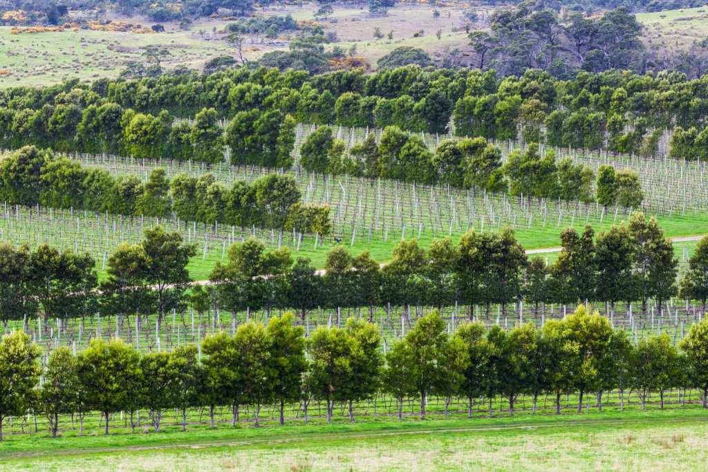 Devil's Corner winery, Apslawn, Tasmania, Australia | © Anastasia Ness/Greg Brave