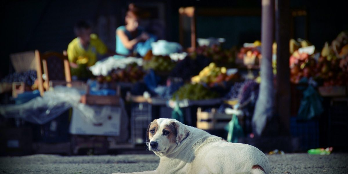 A stay dog sits in the shadow of a market in Albania   © Eszter Grosz/Shutterstock