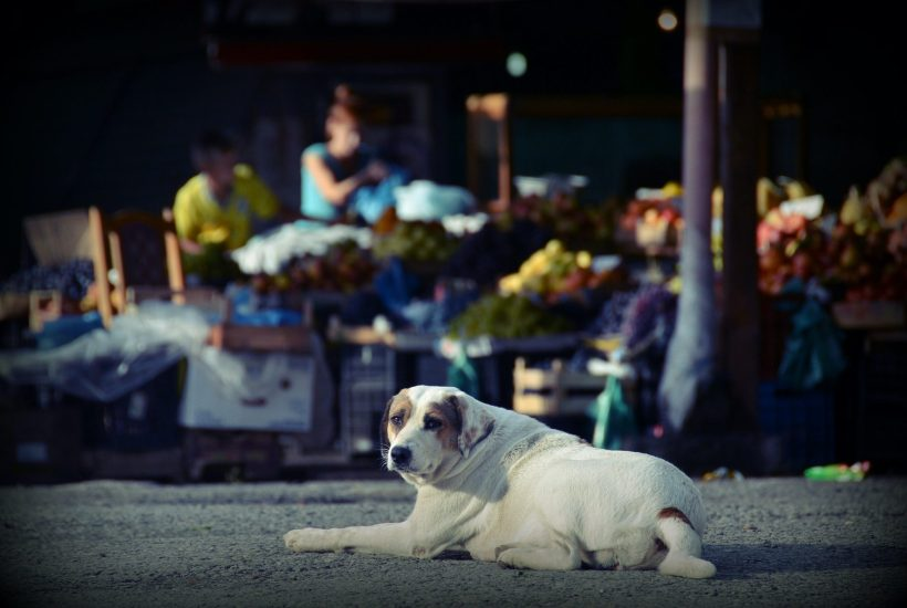 A stay dog sits in the shadow of a market in Albania | © Eszter Grosz/Shutterstock