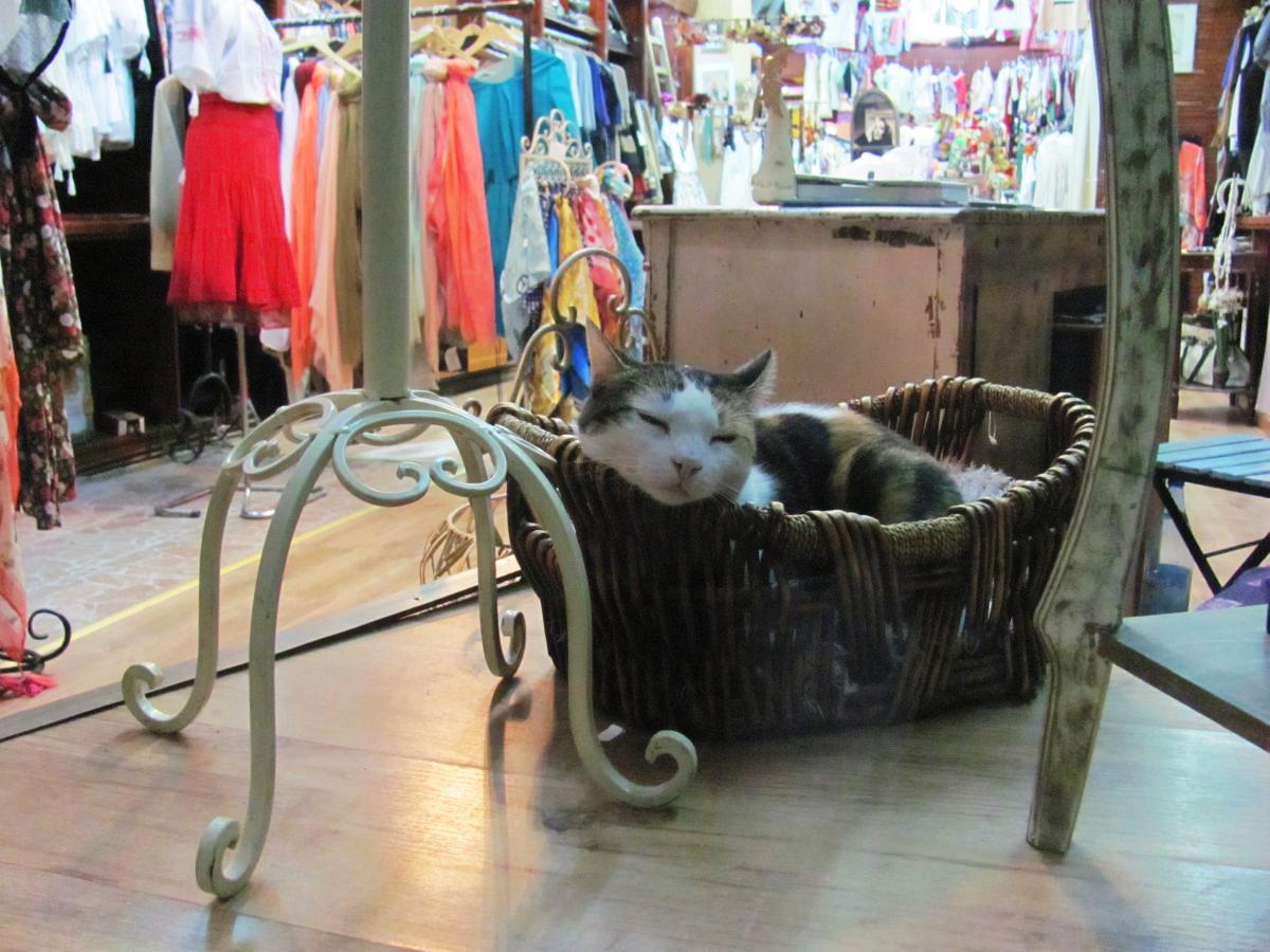 Cat in the Window – Vitrina cu pisică