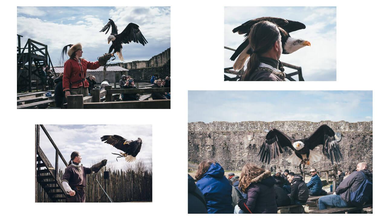 Les aigles des remparts à Provins