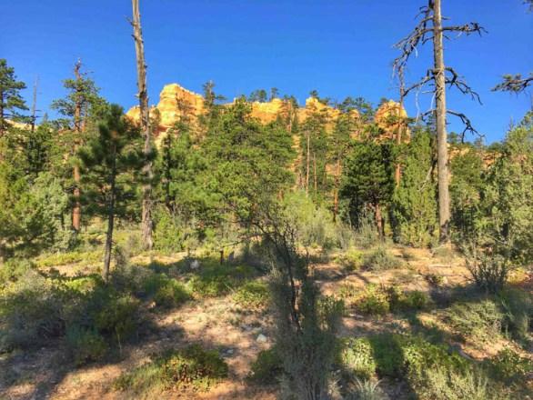 Bryce Canyon - 00047