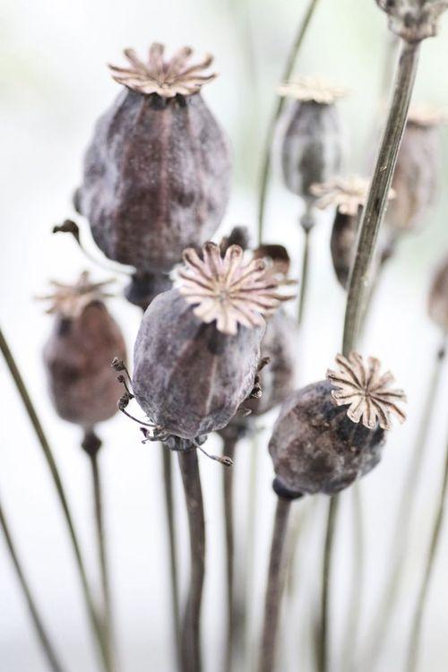deco-plantes-sechees-08