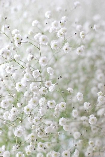 deco-plantes-sechees-25