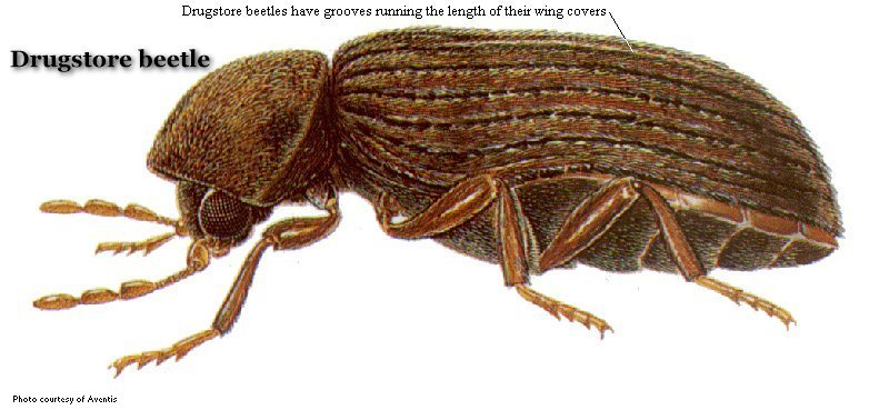 Common D Product Pests United Exterminating Company Cherry Hill Nj