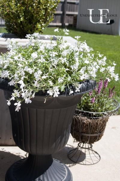Easy Gardening via Unexpected Elegance (1 of 1)-4