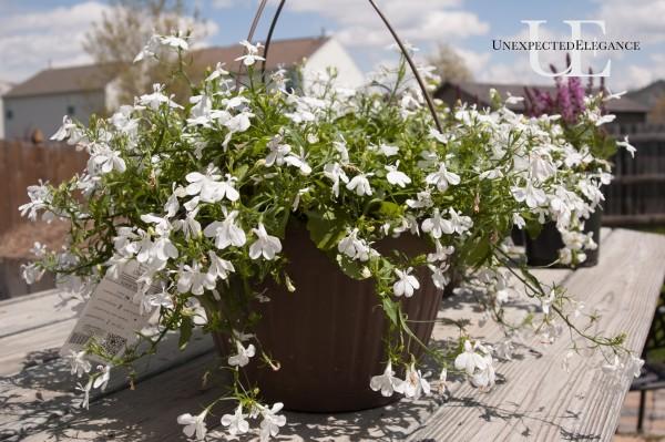 Easy Gardening via Unexpected Elegance (1 of 1)-9