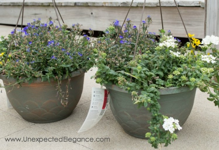 Plants can be expensive! Check out these 3 tips for THRIFTY GARDENING...they will help you save money and your sanity.