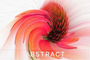 Abstract Photography and Digital Imagery