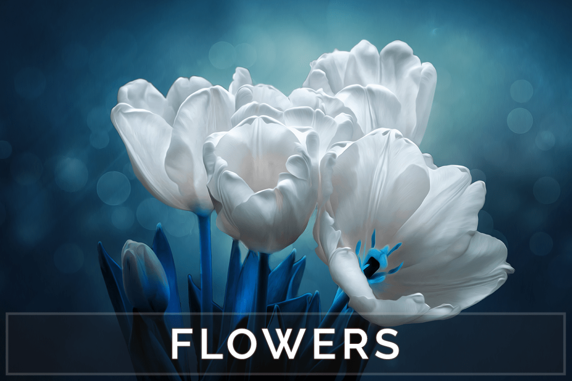 Flower Photos and Floral Art