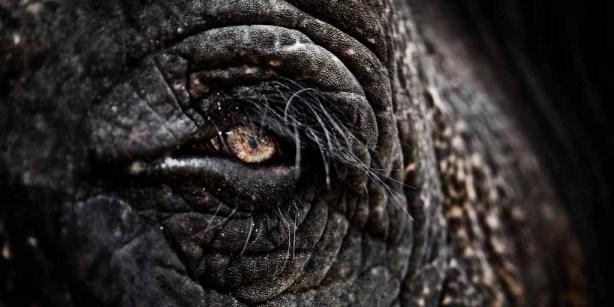 fotografia-elefante-trivandrum-jesusgpastor