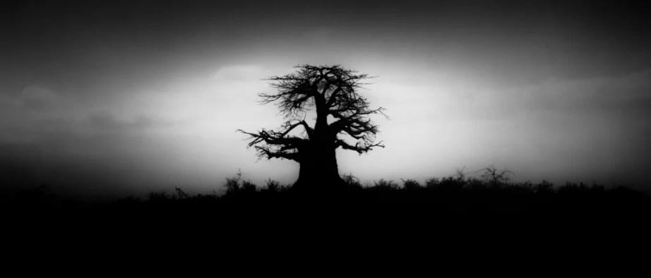 Fotografía de viajes - Fotografía de naturaleza y paisajes - Blanco y negro - África