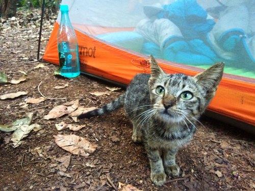 kalalau jungle kitties hawaii