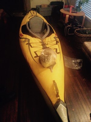 cat on kayak