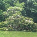 Ecoparque lago de las Garzas