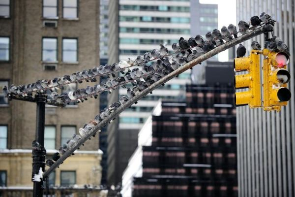Los cruces vehiculares del futuro podrían no tener semáforos gracias al Light Traffic del MIT