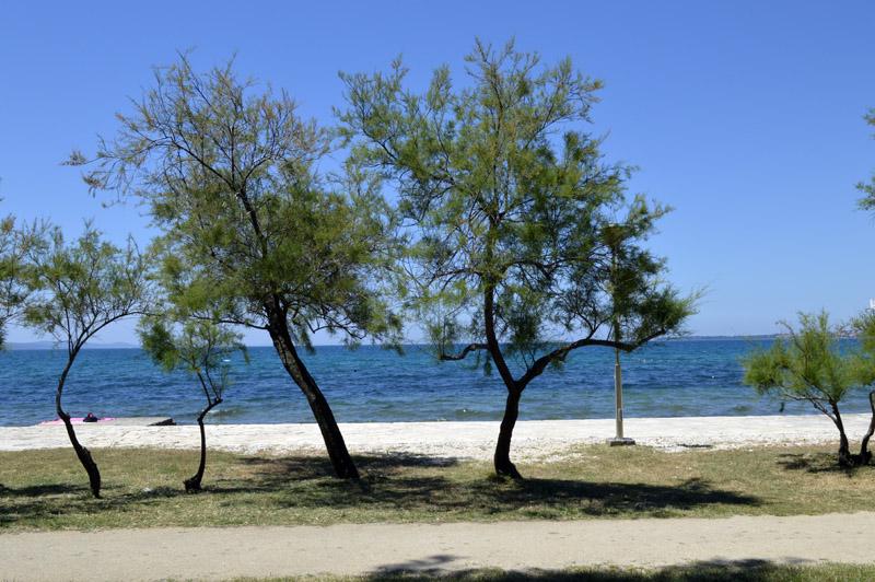 beachtwotrees