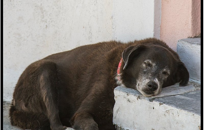 DAVE VORLAND: Photo Gallery — Pets Of Greece
