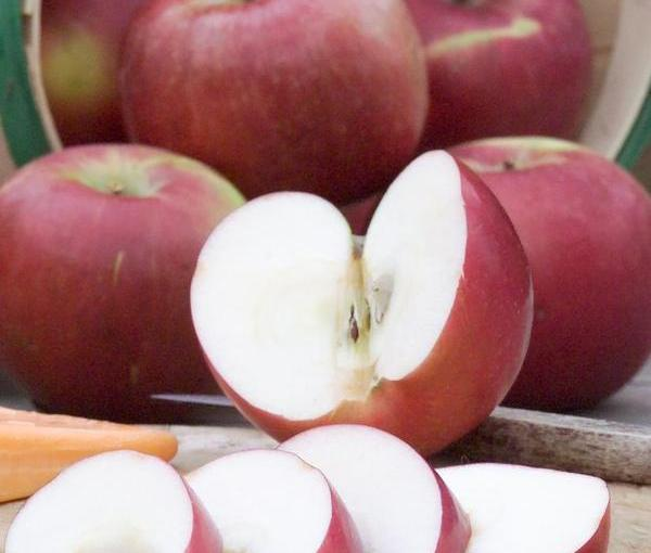 DARREL KOEHLER: The Prairie Gardener — New Apples