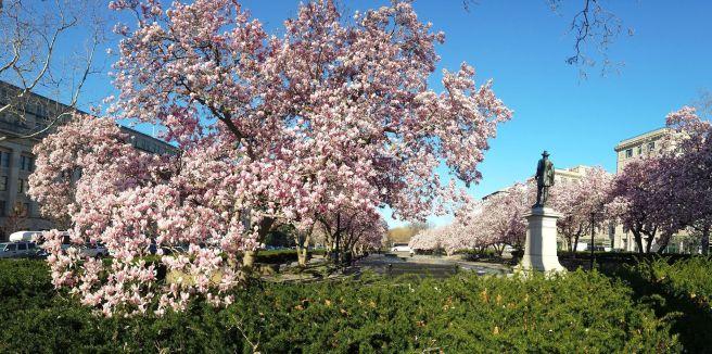 March 18: Rawlins Park.