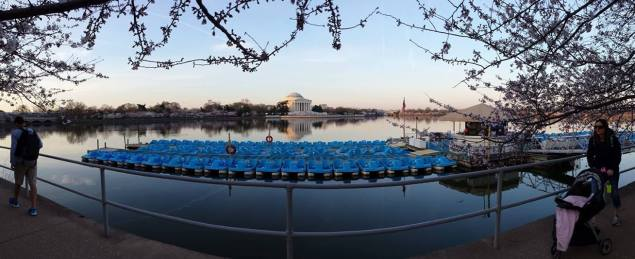 Panoramic view of the paddleboats (left) and the Jefferson Memorial with the cherry blossoms.