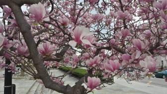 March 17: Rawlins Park.