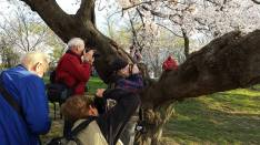 "Someone puts a smiling Buddha in a cherry tree and the place goes nuts; photographers stumbling over themselves to ""get the shot."" THIS photographer takes photo of the ""shooters."""