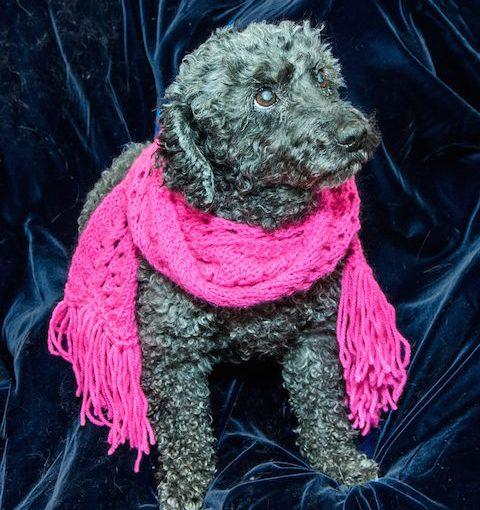 NANCY EDMONDS HANSON: After Thought — Good Dog … Goodbye