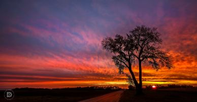 """October 23: """"Country Roads Sunrise."""" Captured this sunrise image in Grand Forks County on a country road. The sky and colors were just vibrant."""