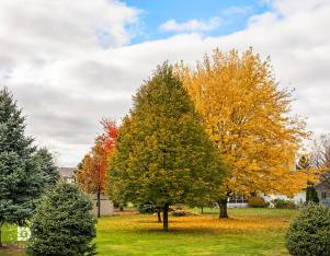 """""""Backyard Fall Color Beauty."""" October 19: Beautiful backyard photos of our neighborhood in Grand Forks."""