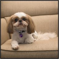 December 8: Guess who went to the groomer today? Pixie did!