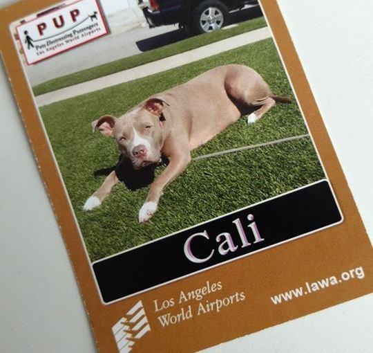TERRY DULLUM: The Dullum File — Pets Unstressing Passengers