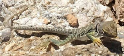 Saw this little cutie on the trail today...and later a snake, which caused me to freeze too long to get my phone in time for a pic. Oh well.